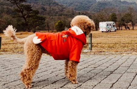 带着狗狗去旅行丨房车上的巅峰云南