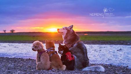 #我的房车日记# 一场为陪伴而出发的旅行~~扶老携幼拖家带狗的初夏内蒙呼伦贝尔房车行(下)