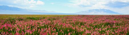 西行漫记——六千公里的房车新疆之旅